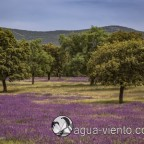 Springtime on Cabañeros National Park in Spain