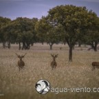 Animals in Cabañeros National Park in Spain