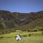 Organya landscape - random cows