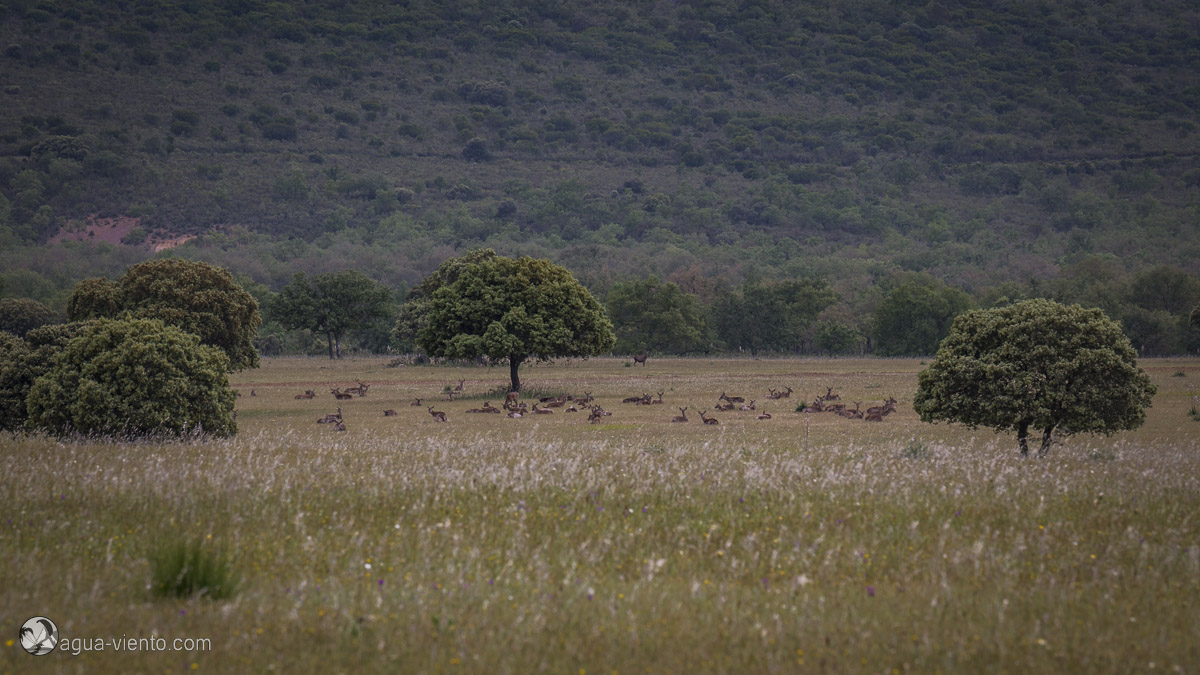 Cabañeros National Park - best and largest protected areas in south of Spain