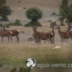 Cabañeros National Park protected area for animals in Spain