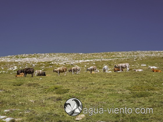 Reguio Malniu - Puigpedrós